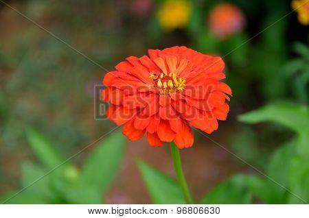 Vibrant Aster Flower