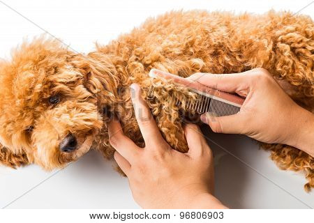 Close up of dog fur combing and detangling during grooming
