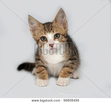 Striped And White Kitten Sitting On Gray