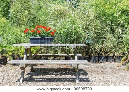 Garden With Wooden Bench And Planter With Blooming Geraniums