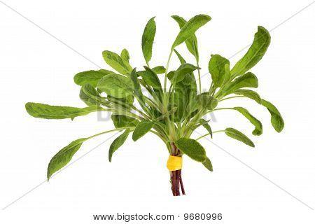 Sage Herb Leaf Posy