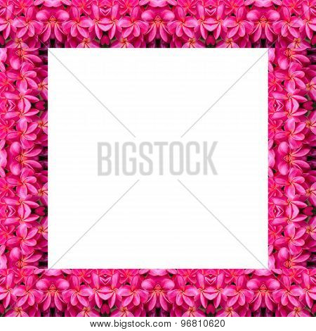 Frangipani Flower Seamless Pattern Background