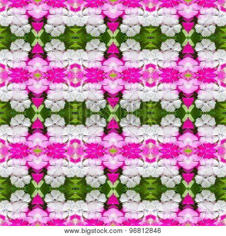 Dianthus Chinensis (china Pink) Seamless Pattern Background