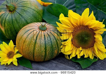 Freshly Picked Pumpkins With Sun Flower