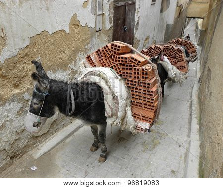 Donkeys carrying bricks