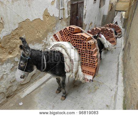 Donkeys carrying bricks