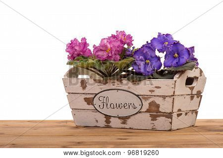 Violet flowers in the wooden decorative box isolated.