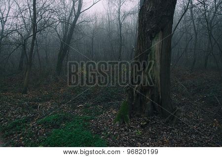 bare forest in winter