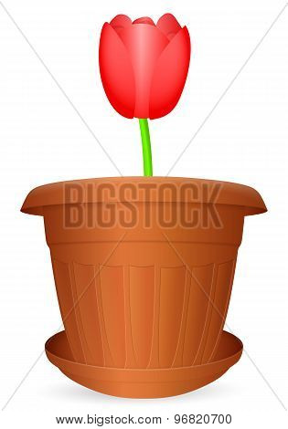 Flowerpot Tulip