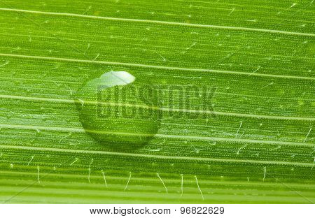Drop On Green Leaf