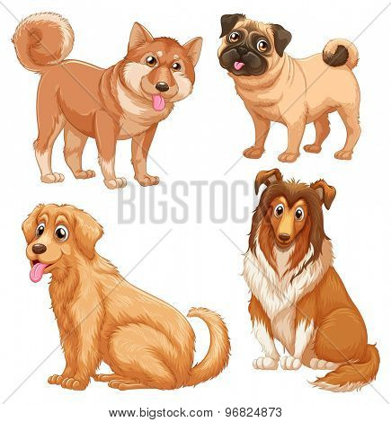 Brown hairy dogs on white background