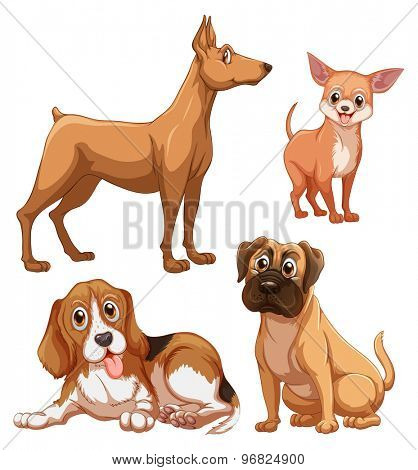Differrent breed of brown color dogs on white background