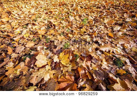 Autumn Leaves On Forest Floor For Backgrounds