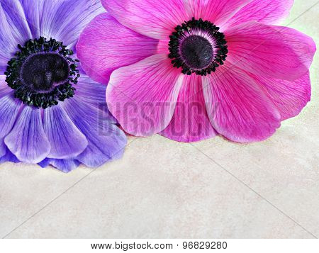 Anemonie Top Border With Copy Space.