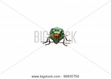 Metal Green Bug Isolated On A White Background