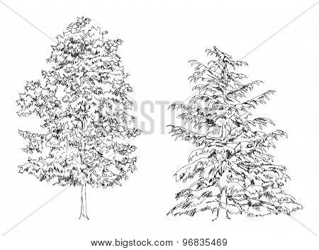 Trees, Oak, birch, fir, pine.Sketch collection