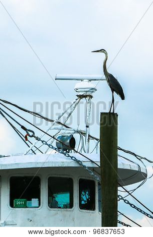 Heron Guards Boat