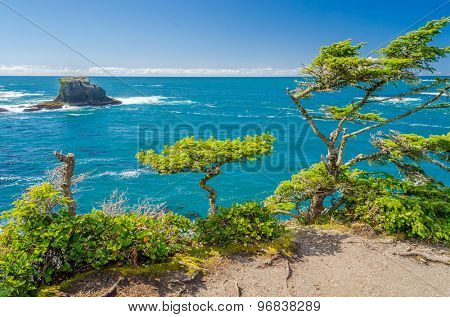 Fragment of ocean view from Soleduck trail in Olympics park, Washington, USA