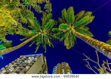 Fantastic view of tropical city at night in Honolulu, Hawaii, USA
