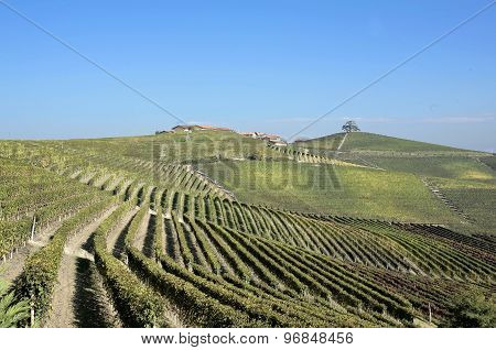 The Land Of Barolo Wine