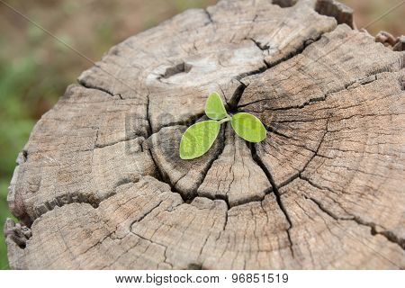 Green Leaves On The Background Wood Texture