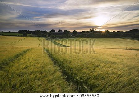 Beautiful Summer Vibrant Sunset Landscape Over Agricultural Crop Fields