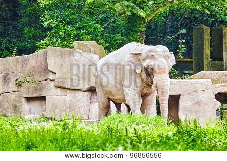 Big Elephant.