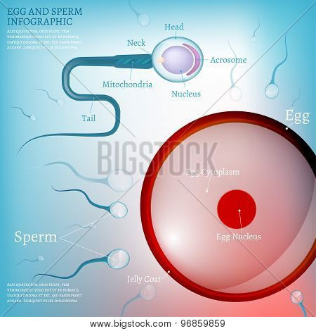01 Egg Fertilization