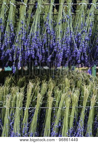 Lavender Drying Process