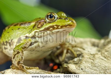 Frog Monitor Environment