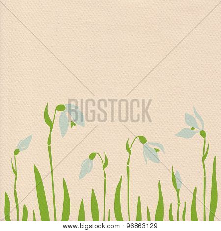 Snowdrops On Paper Background