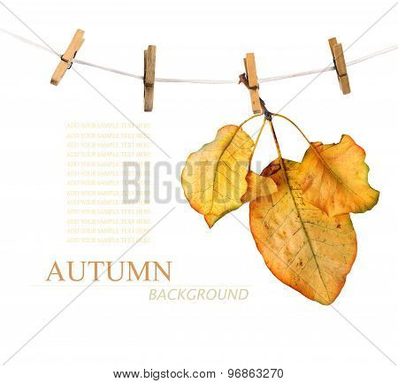 Bright Autumn Leaves On The Old Wooden Background