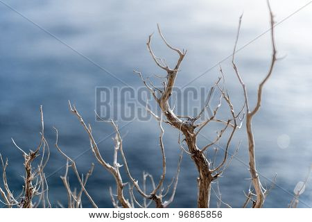 Abstract hoto of some winter branches