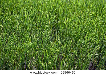 Fresh green plants outdoors