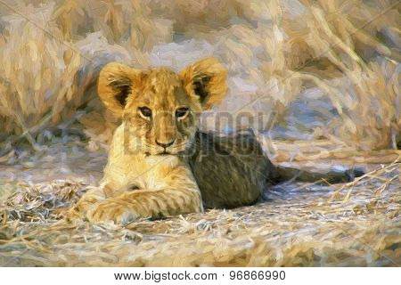 Fine Art Print Of Aa African Lion Cub