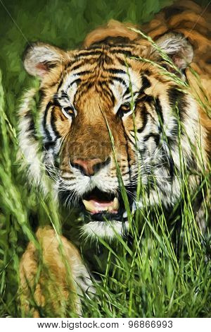 Fine Art Print Of Bengal  Tiger Stalking Prey Through Grass