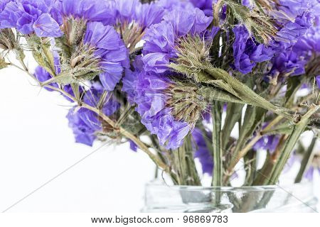 Dry Bunch Of Small Flowers Blue Color Closeup
