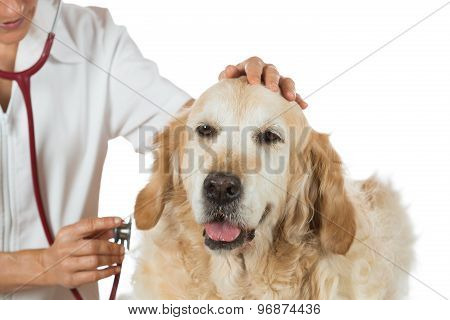 By Listening To A Dog Veterinary Golden