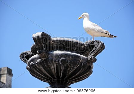 Seagull on stone sculpture, Liverpool.