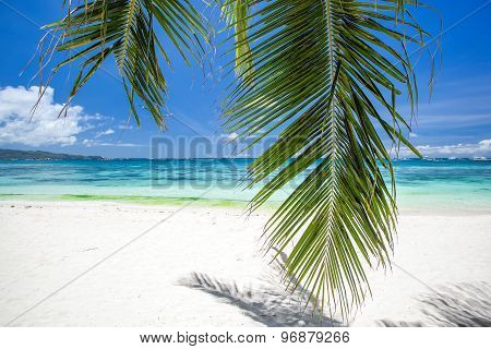 Tropical Beach With Coconut Palm Tree Leafs, White Sand And Turquoise Sea Water