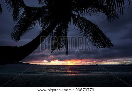 Sunset On Tropical Beach With Palmtree Silhouette