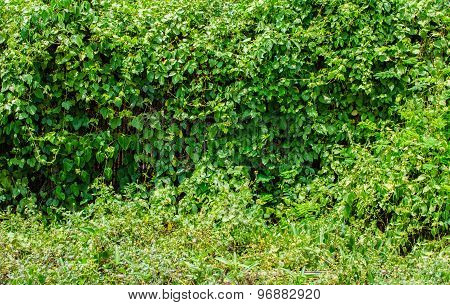 Green Leaves Wall And Grass Floor
