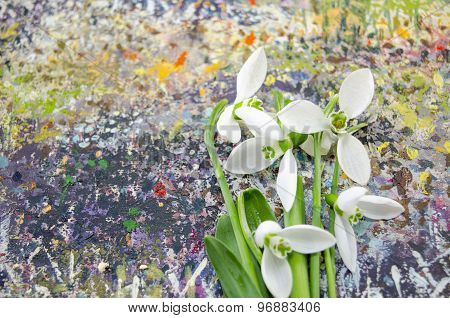 Snowdrop Flowers On A Colorful Background