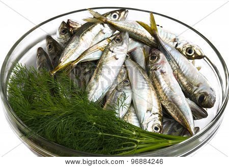 Black Sea freshly caught scads.