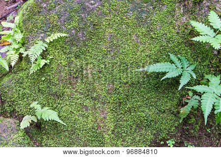 Green moss on rock texture background