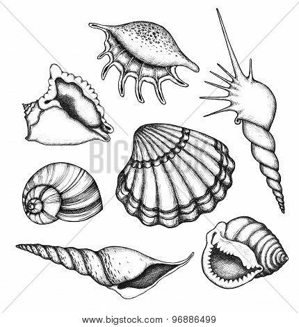 Sea shells set