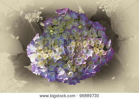 Floral Background Suitable For A Greeting Card