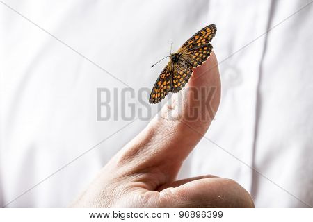 Beautiful Butterfly On A Businessman Finger Holding Out His Hand Towards The Camera