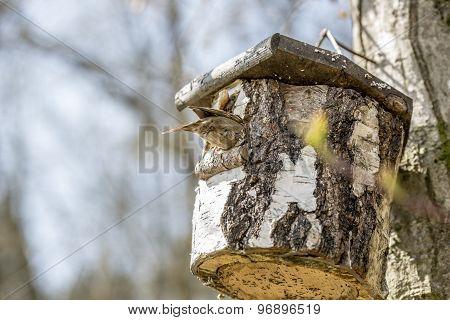 Bird Sitting On A Nesting Box In A Tree