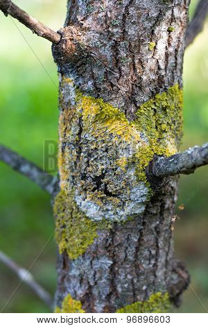 trunk tree covered lichen moss natural background